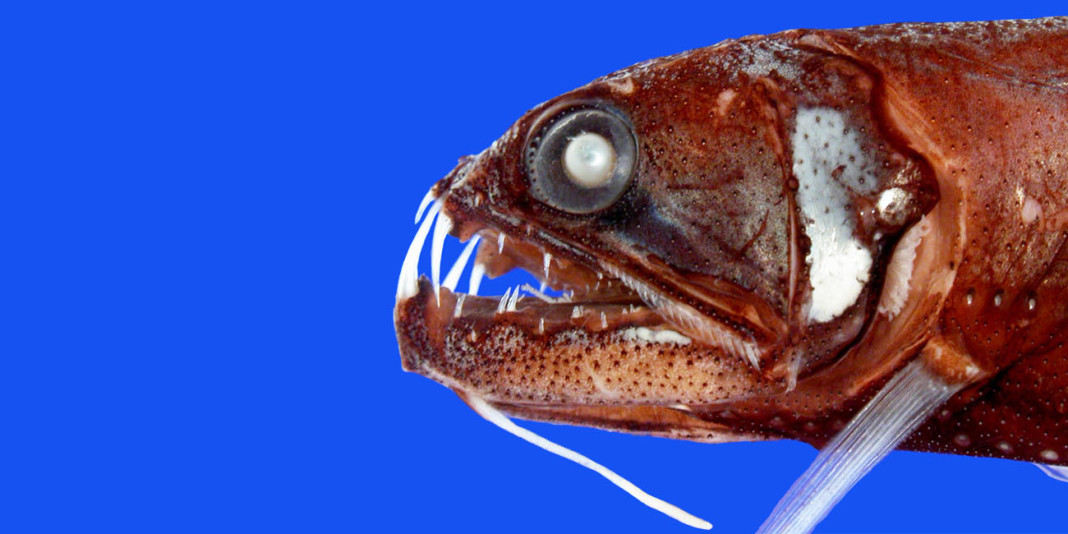 Top 5 Creepiest Deep Sea Creatures of All Time