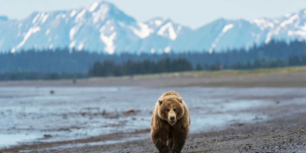 The Bear: 15 Things You Didn't Know (Part 2)