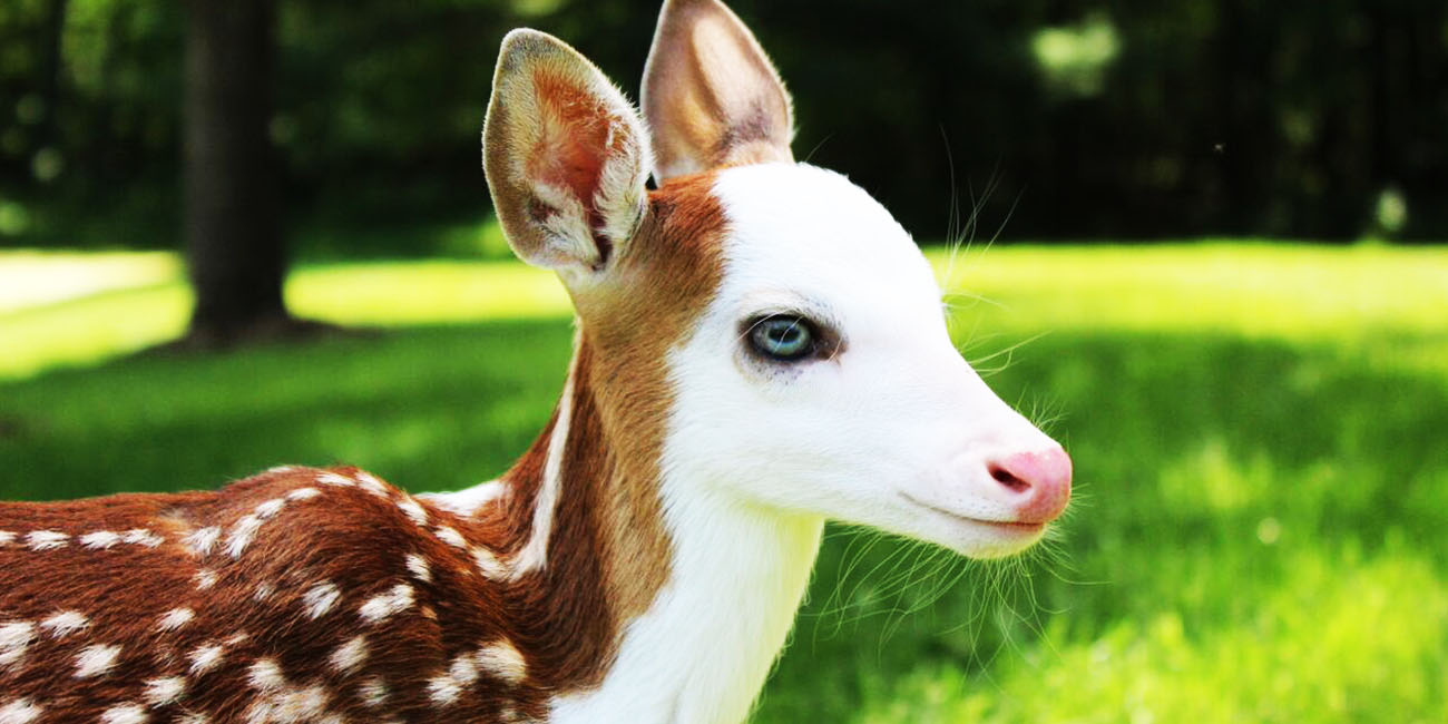 Deer: 10 Fun Facts That Will Surprise You (Part 1)