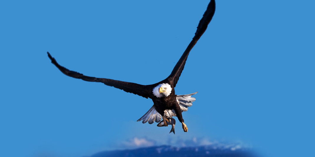 Eagle Facts: 15 Things You Didn't Know (Part 2)