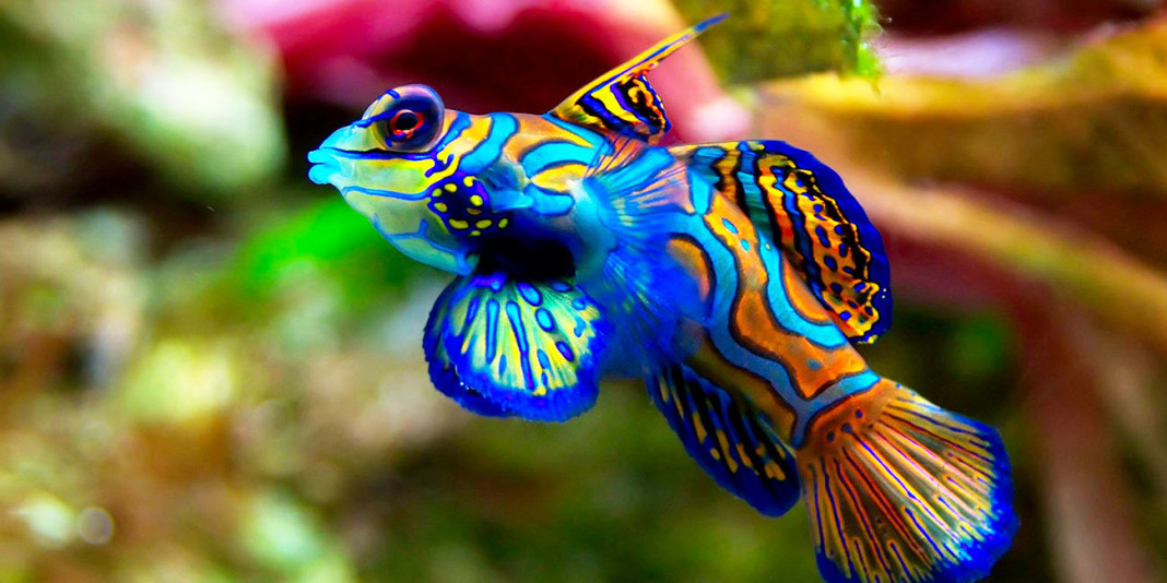 The Fish: 15 Things You Didn't Know (Part 1)