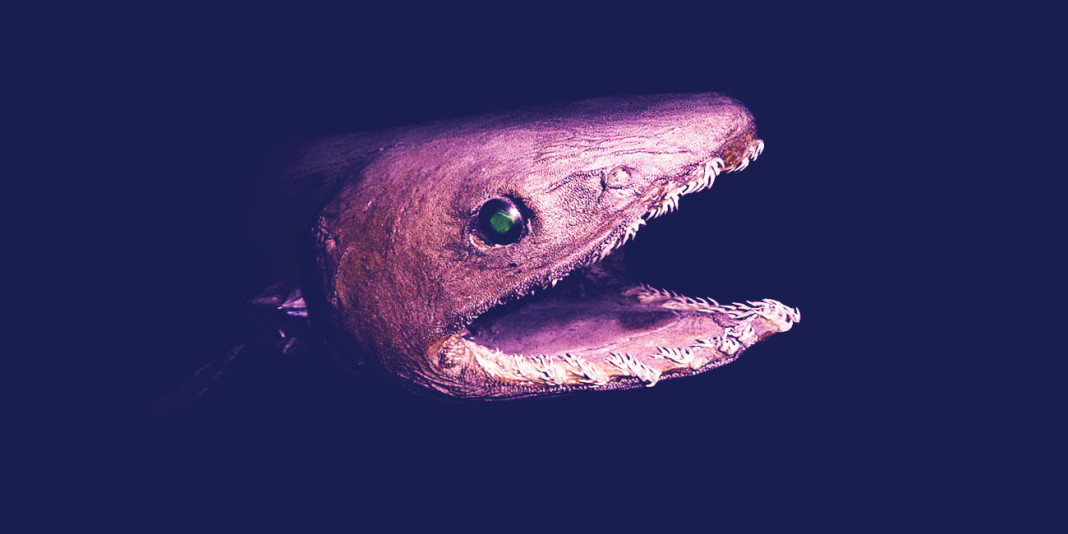 Frilled Shark: 15 Things You Didn't Know (Part 1)