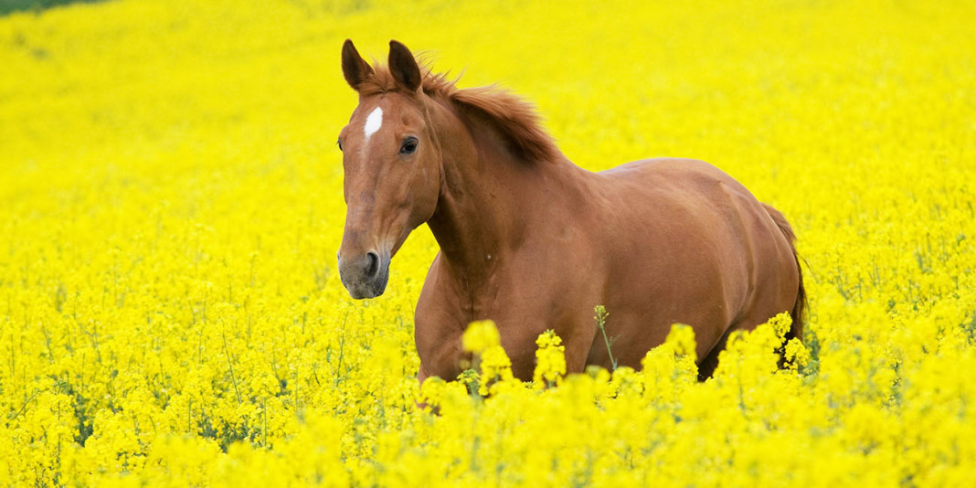 Horse Facts: 15 Things You Didn't Know (Part 1)