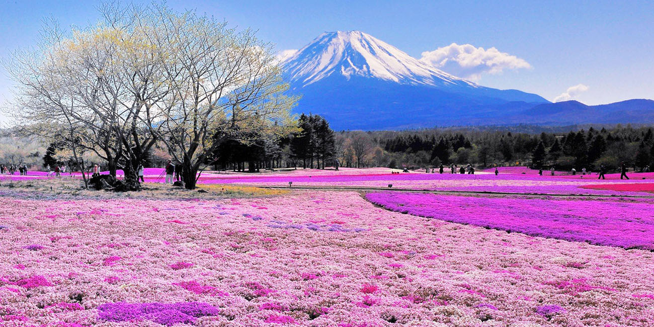 Japan: 51 Odd Things You Didn't Know (Part 4)