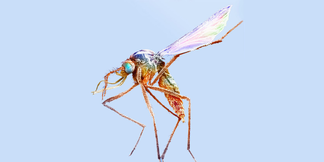 Malaria: 15 Things You Should Know (Part 1)