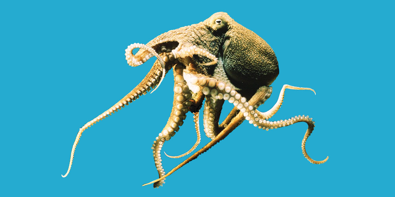 Octopus Facts: 22 Things You Didn't Know (Part 1)