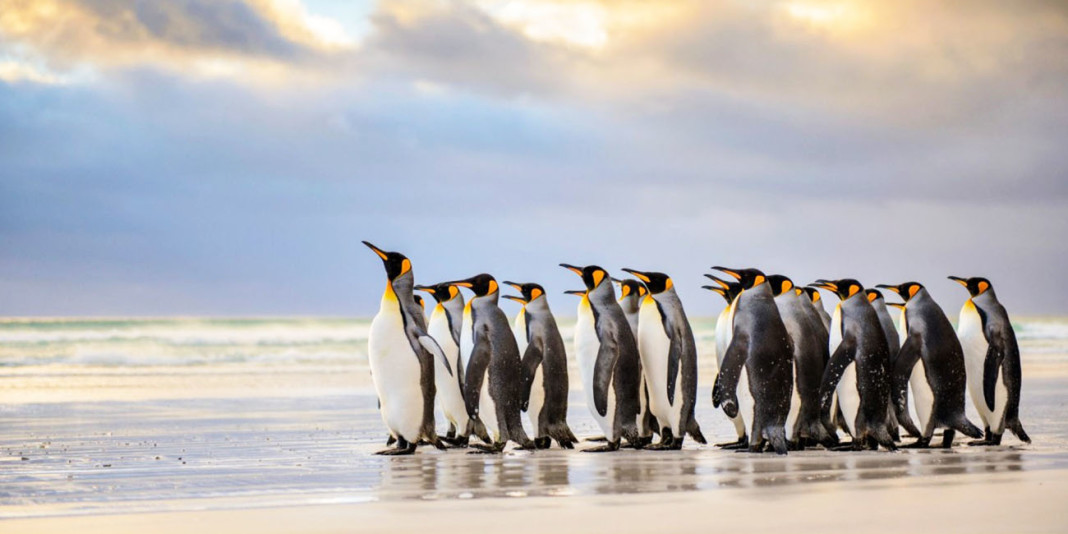 Penguin Facts: 15 Things You Didn't Know (Part 2)