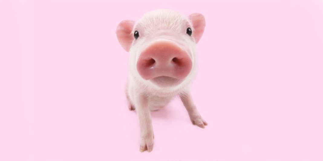 The Pig: 15 Things You Didn't Know (Part 1)