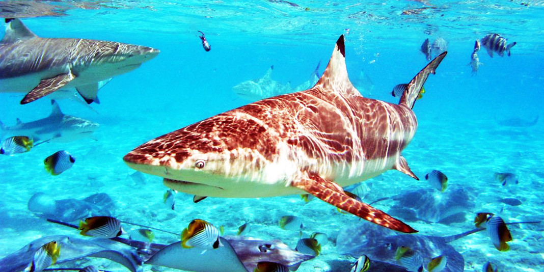 Shark Facts: 15 Things You Didn't Know (Part 1)