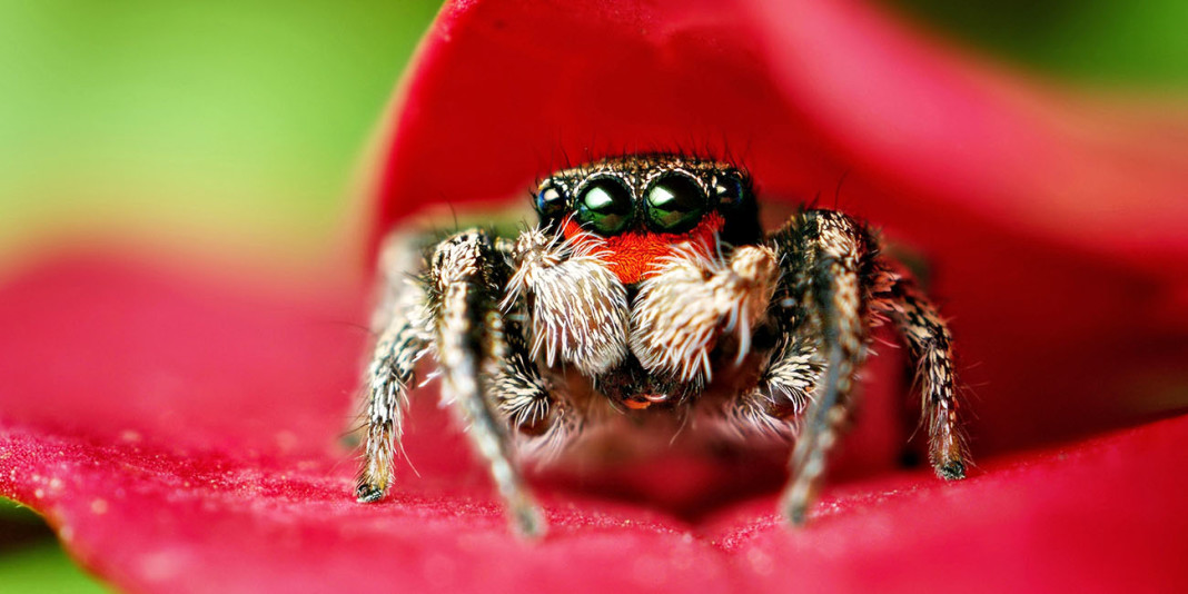 The Spider: 15 Things You Didn't Know (Part 2)