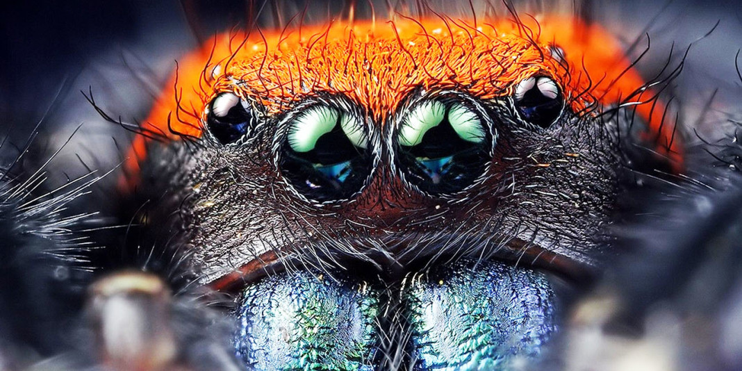 The Spider: 15 Things You Didn't Know (Part 1)