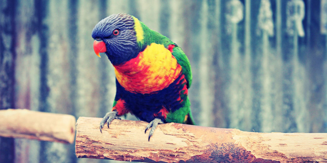 The Parrot: 15 Interesting Facts to Blow Your Mind (Part 2)