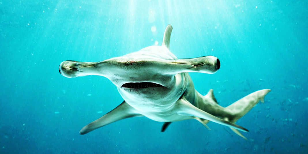 Shark Facts: 15 Things You Didn't Know (Part 2)