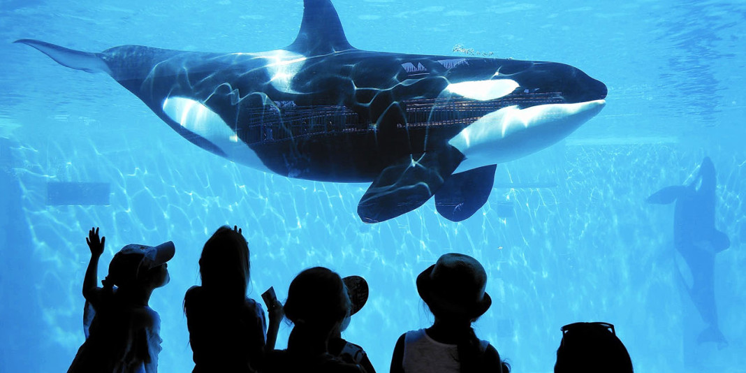 SeaWorld: 15 Facts You Didn't Know (Part 2)