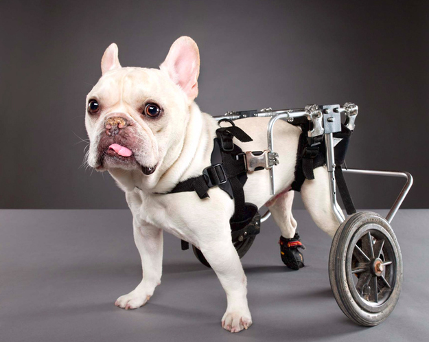 25 Photos of Disabled Animals Guaranteed to Inspire You
